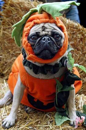 The Halloween Dog